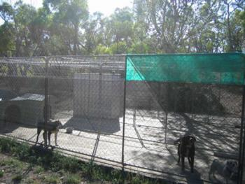 Naracoorte Lucindale Locality List  Image . This photo sponsored by Kennels Category.